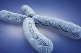 aging-theory-chromosome