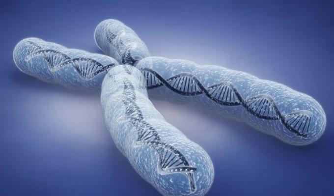 human chromosome