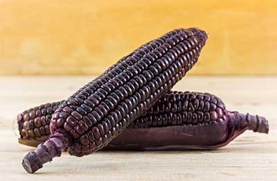 mazorcas de maíz morado