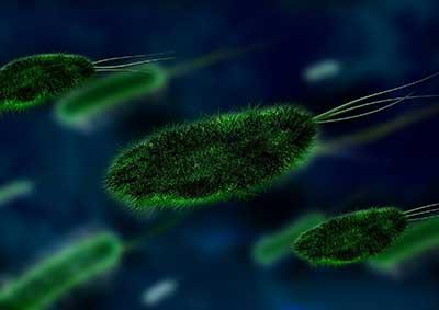 bacteria up close