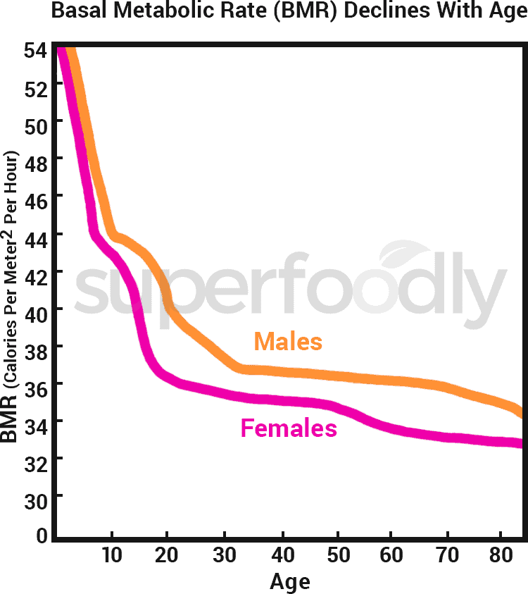 basal metabolic rate decline rate chart for male and female