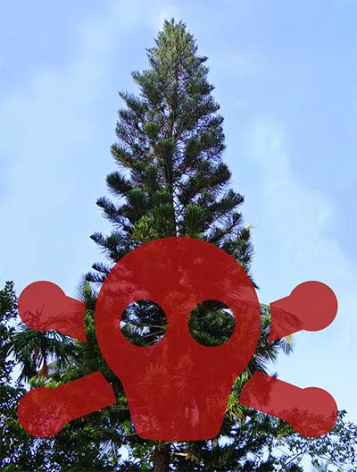 Norfolk island pine with toxic symbol