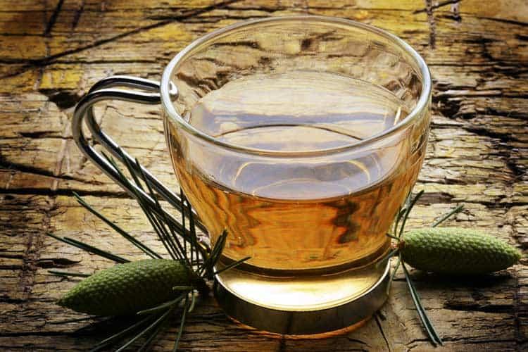 cup of pine needle tea
