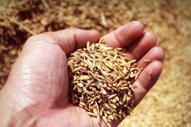 puñado de arroz integral