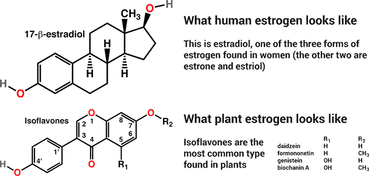 How to increase estrogen levels in human body naturally