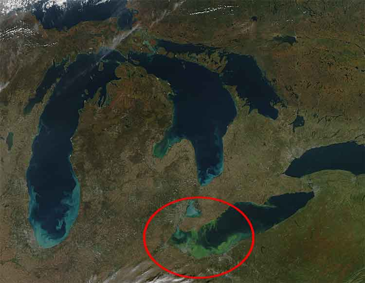 2011 Lake Erie algae bloom satellite photo