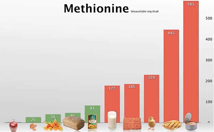 methionine levels in foods