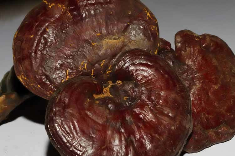 Lies About Reishi Mushroom Benefits For Cancer And Leukemia