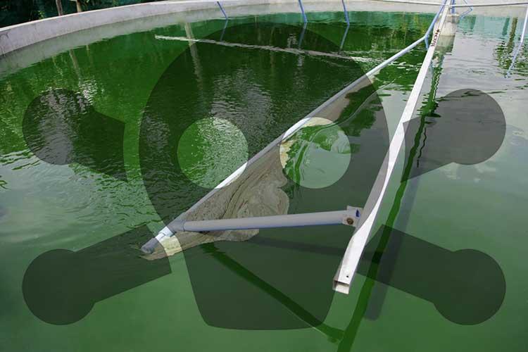 spirulina pool with toxic symbol
