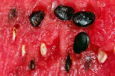 raw watermelon seeds