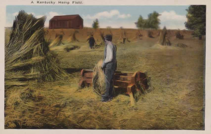 antique postcard showing hemp field in Kentucky
