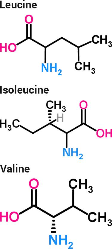 estructuras químicas de los 3 aminoácidos de cadena ramificada