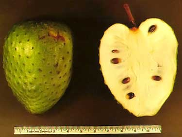 guanabana fruit, sliced in half showing size