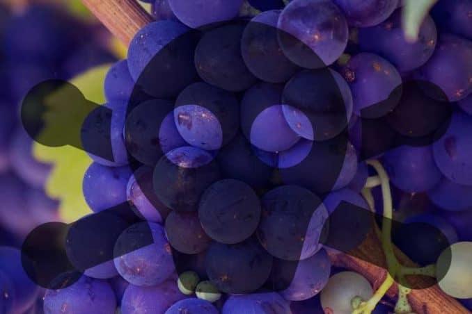toxic grapes