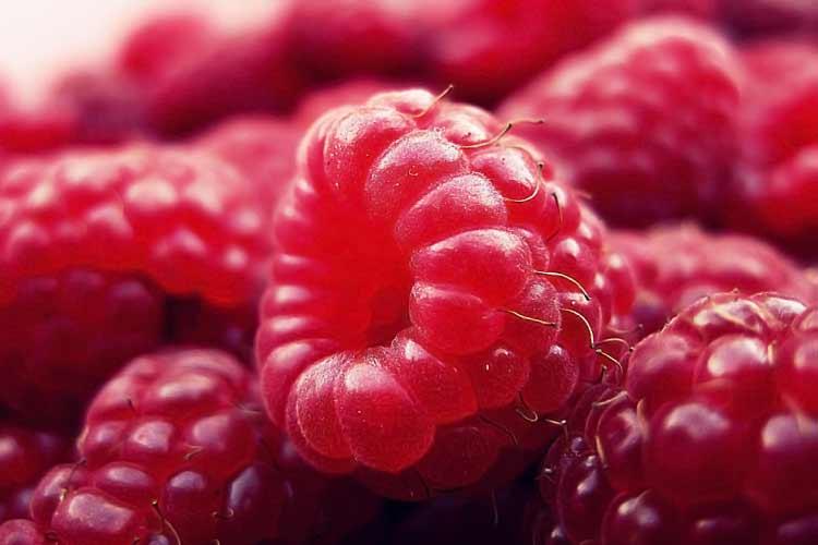 red raspberry closeup photo