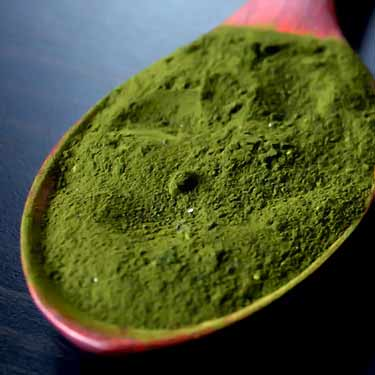 spoonful of wheatgrass powder
