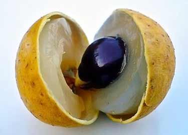 inside of fresh longan fruit cut open