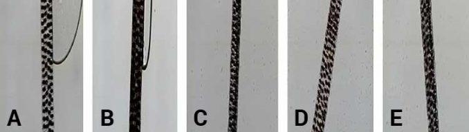 microscopic photos of hair strand from each test group