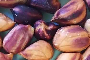 foto de primer plano de cómo son los cacahuetes de la jungla