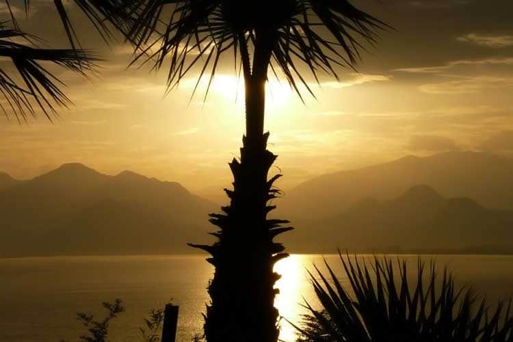 tropical palm tree with ocean sunset