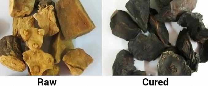 difference between what raw and cured fo ti looks like