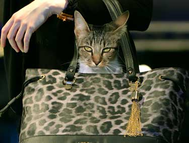 cat inside of woman's designer purse