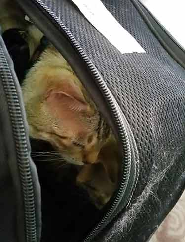 airplane cat carrier