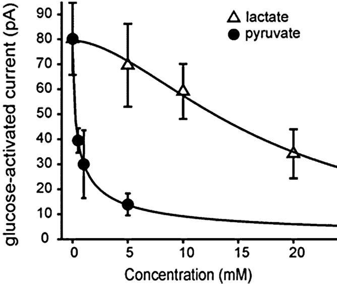 graph of how lactate and pyruvate boost orexin neurons