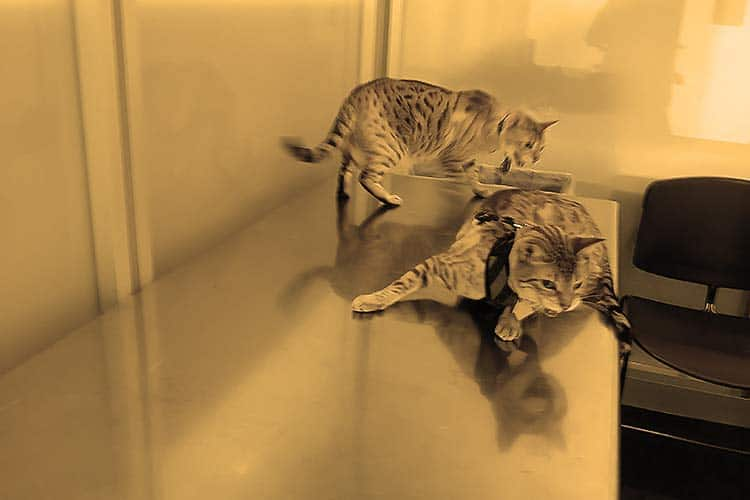 carry-on cats going through airport security