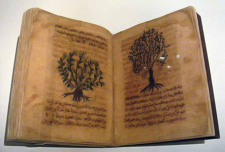 De Materia Medica in Arabic, Spain, 12th-13th century