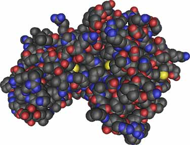 what AMPK enzyme looks like