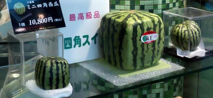 square watermelon for sale at Japanese fruit shop