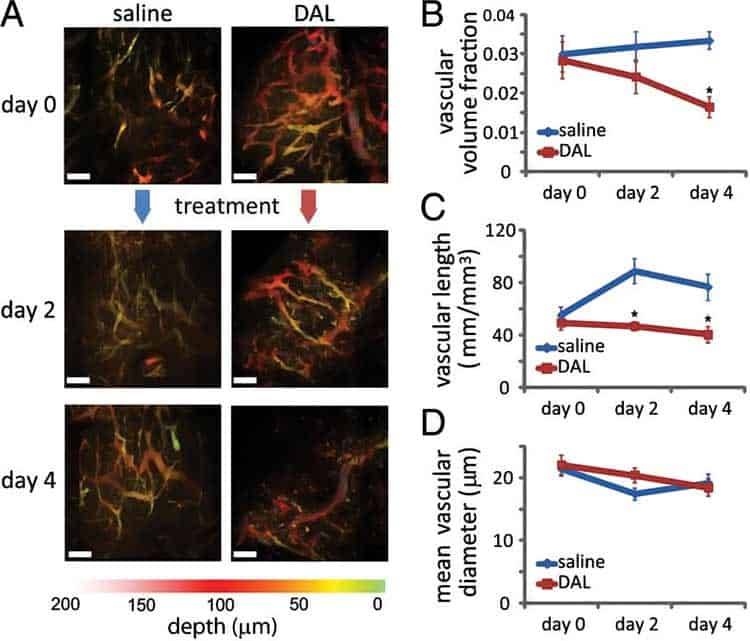 photos and graph showing antivascular benefits in tumors on mice