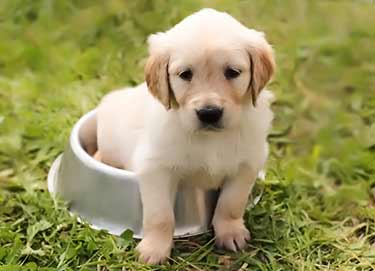 puppy sitting in dog food dish