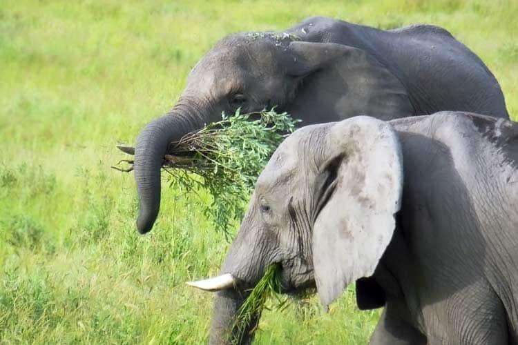 how to eat an elephant pdf