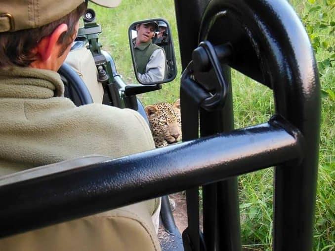 wild leopard vs. human encounter