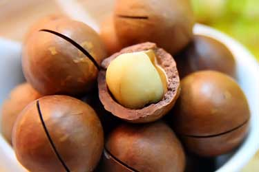 macadamia nuts in their shell