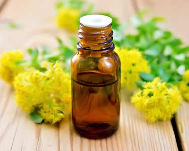 rhodiola rosea essential oil