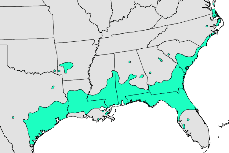 map of where Ilex vomitoria (yaupon holly) grows in the US