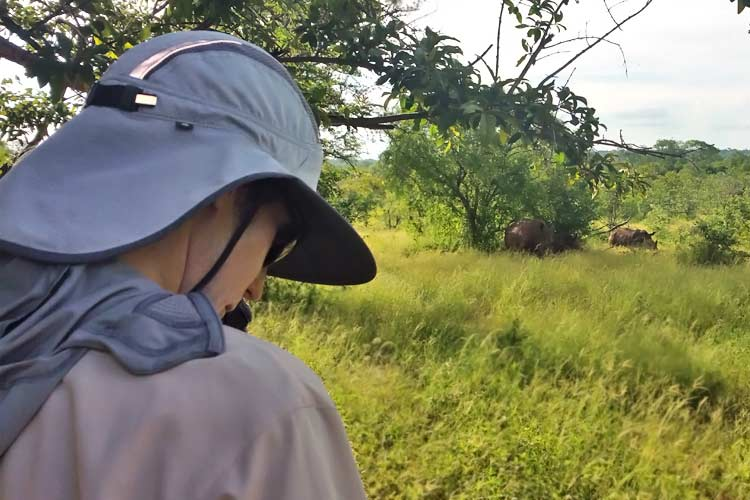studying white rhinos in Zambia