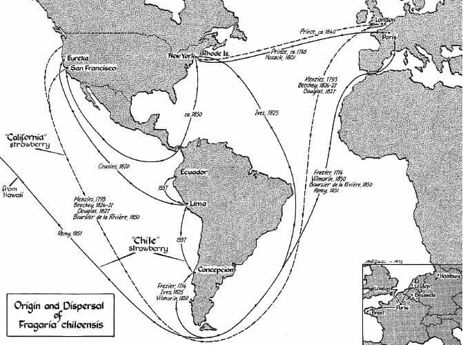 mapa que muestra la historia reproductiva de las fresas