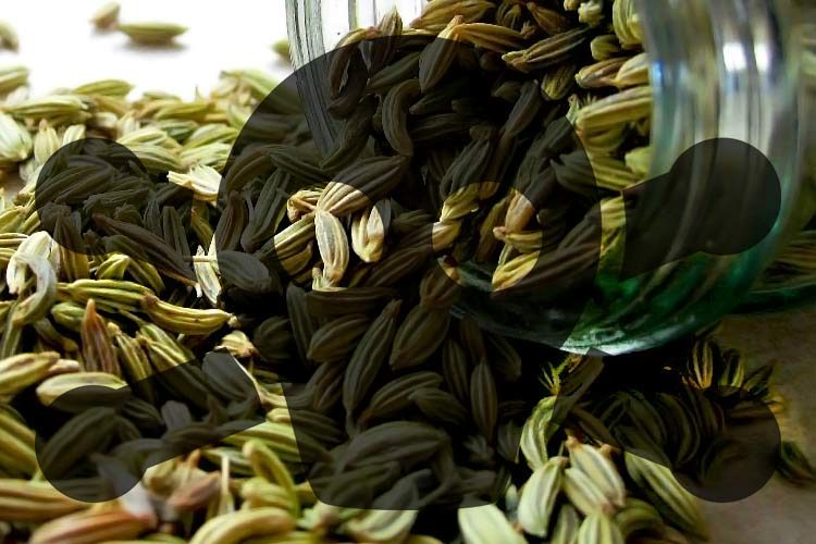 toxic fennel seeds