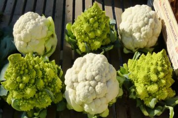 fresh heads of broccoflower and cauliflower