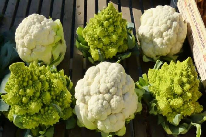 fresh heads of broccoflower and cauliflower