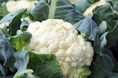 head of fresh raw cauliflower