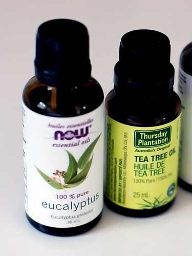 bottles of eucalyptus oil and tea tree oil