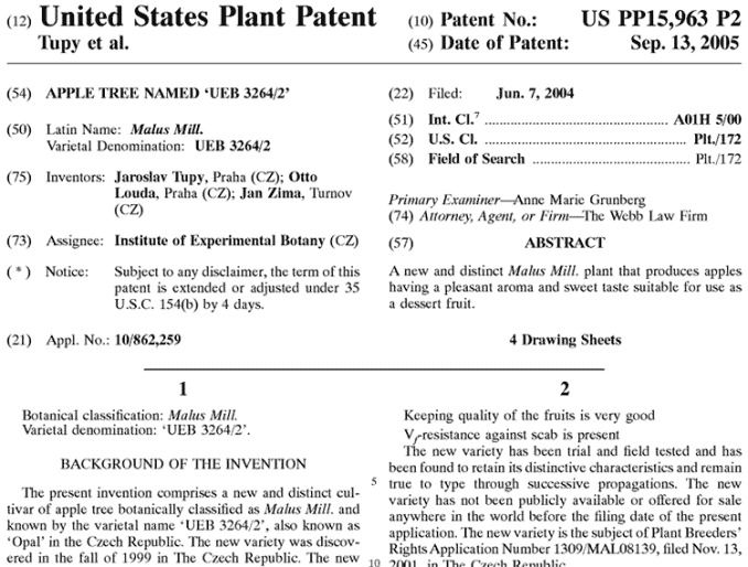 U.S. patent for Opal cultivar