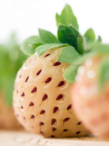 closeup photo of what a real pineberry looks like