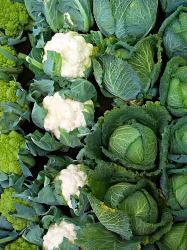 heads of cabbage, cauliflower and romanesco broccoli