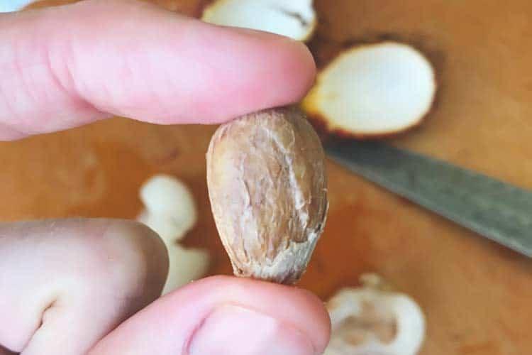 holding a raw rambutan seed